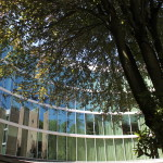Photo of Library windows & tree