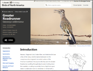 Entry for Greater Roadrunner, with introduction, map, and navigation menu shown.