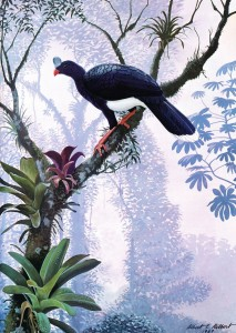 Painted illustration of bird